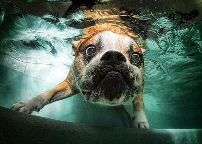 Обычно собаки очень любят купаться. Конечно, как и среди людей, среди собак тоже бывают разные характеры и нравы, но не любящий воду пёс – скорее, исключение.