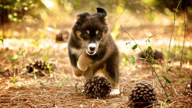 Собаки в природе картинки